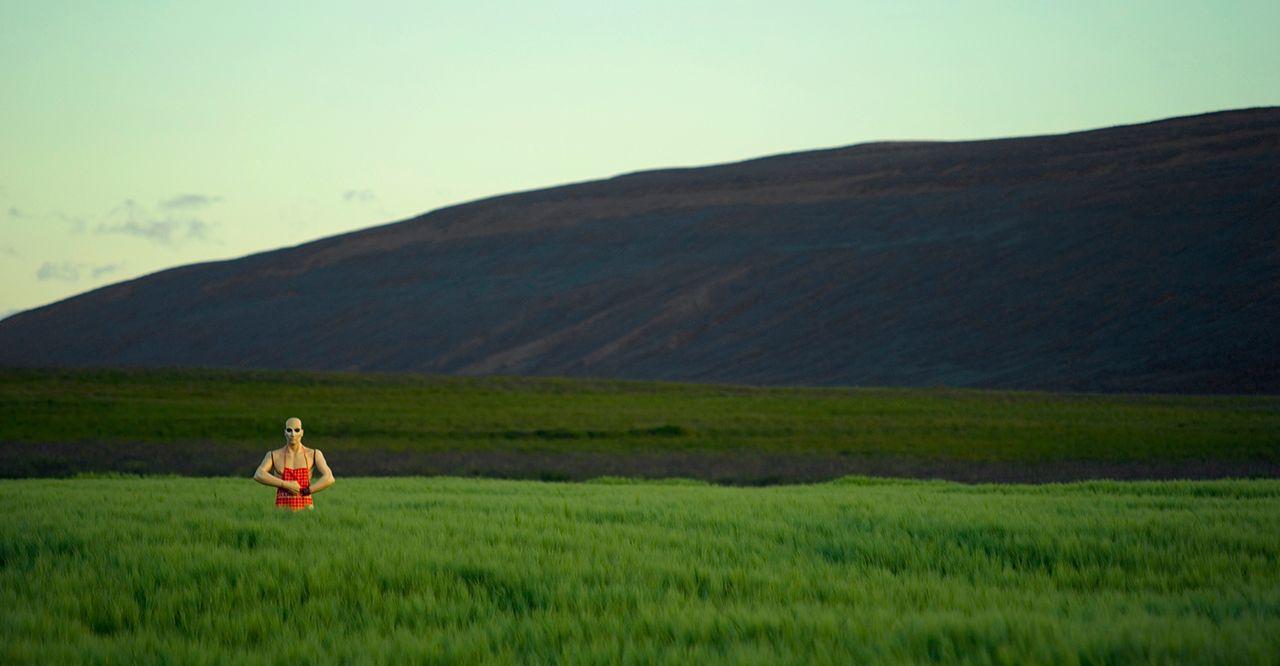 Scarecrow Roadside.jpg