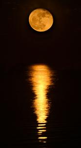 49_0_780_1shoot_the_moon_2.jpg