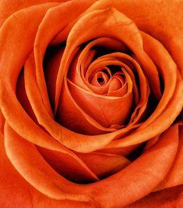 48_0_778_1_r_flower.jpg