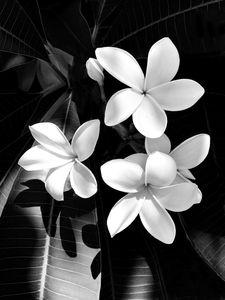 black&flower.jpg