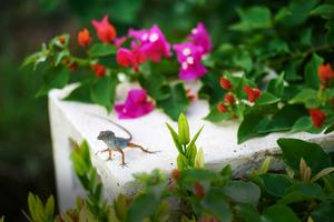 Tropical garden visitor, Luxury Village Cap Cana