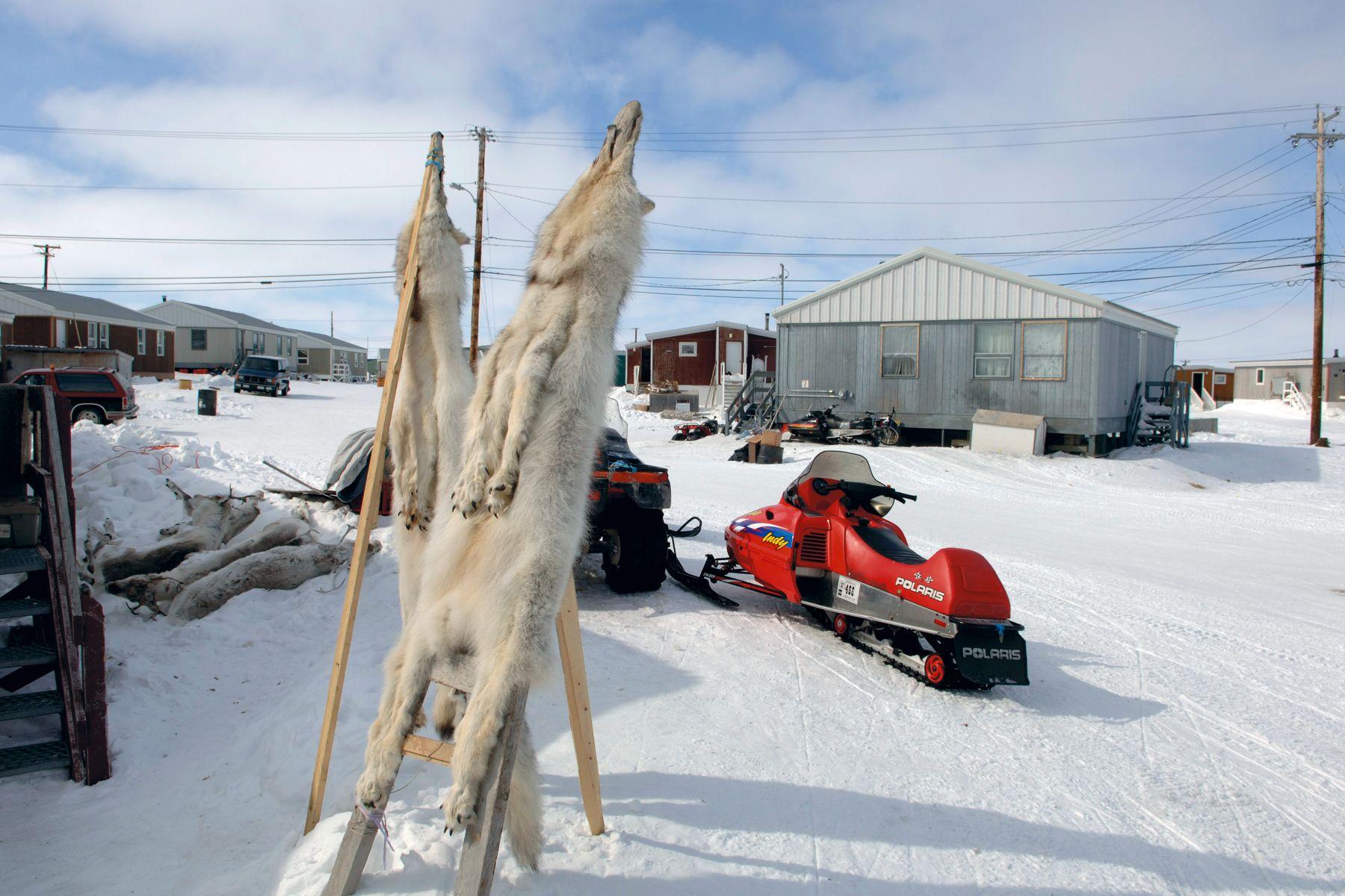 Wolf skins, Cambridge Bay, Nunavut