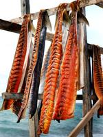 Arctic Char drying on racks