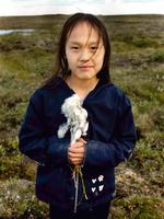 Arctic cotton -  Young girl picking Arctic cotton , tundra, near Cambridge Bay, Nunavut