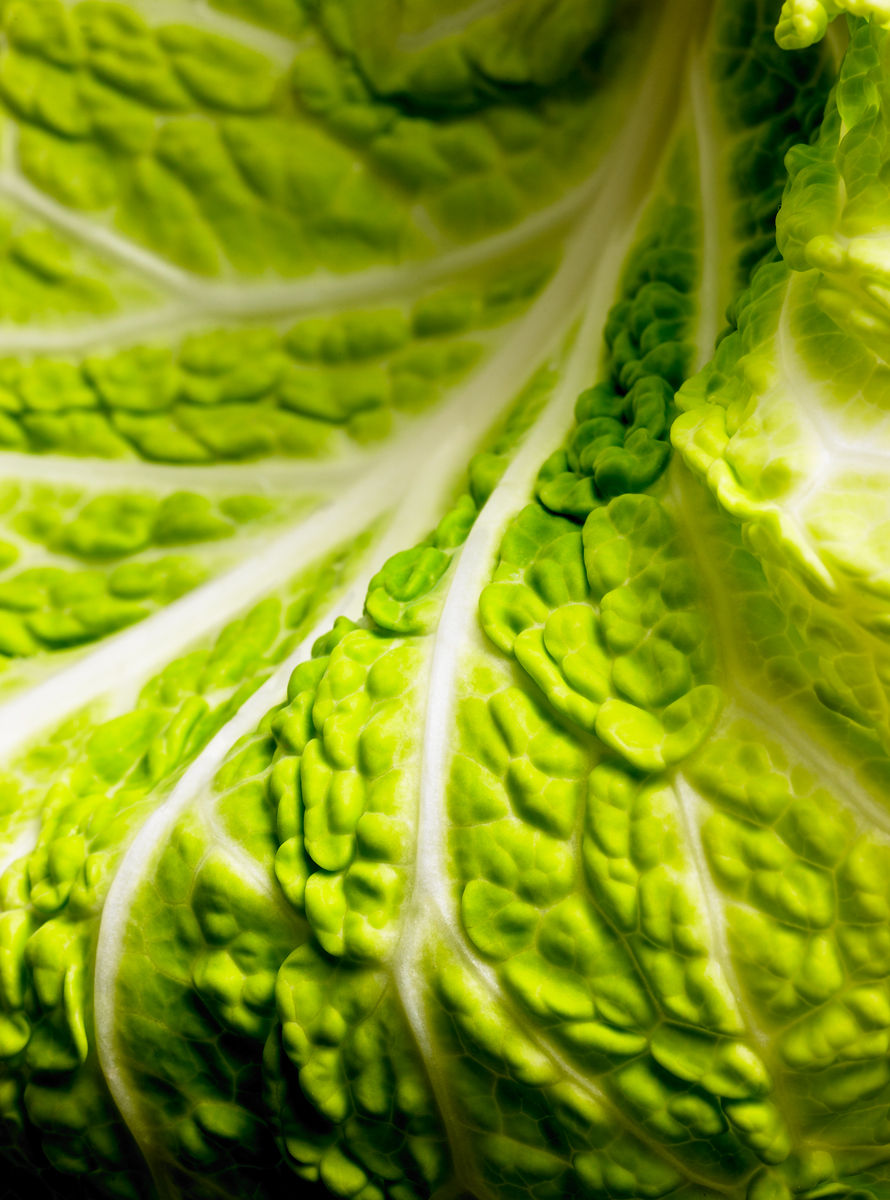 1cabbage_test2
