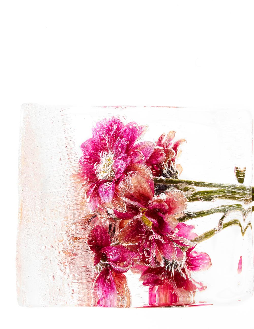 Flowers_test 49604.jpg