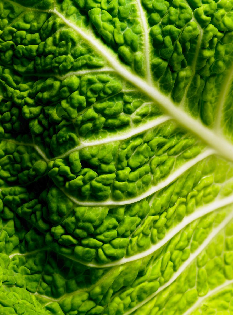 1cabbage_test1
