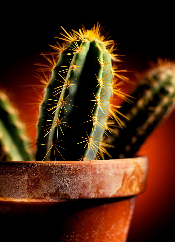 Cactus LBN.jpg