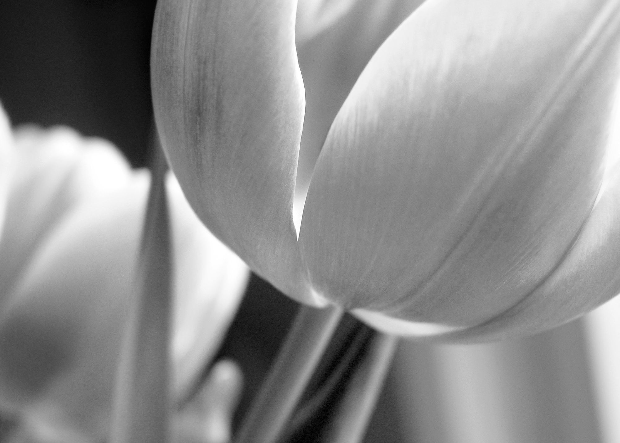 Flower (Contact) LBN.jpg
