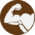 ICON 03 Muscle MID.png