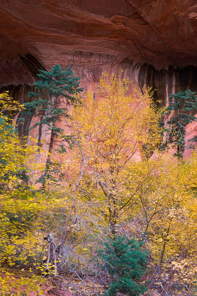 Double Arch Alcove Autumn Zion National Park.jpg