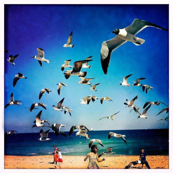 The Birds, Ft. Lauderdale, FL