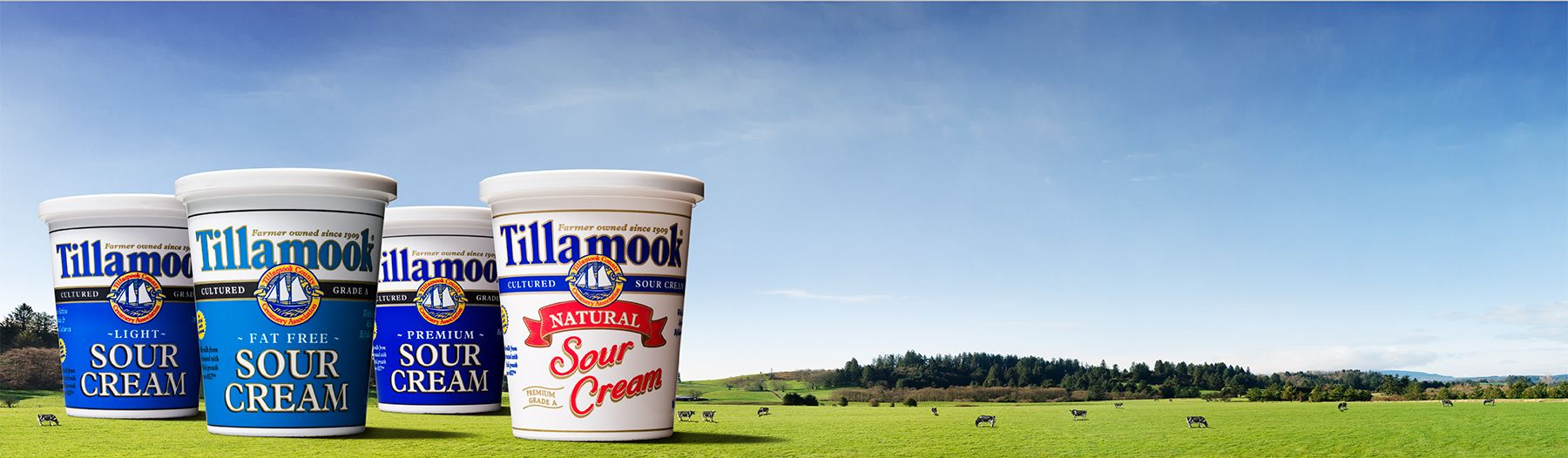 24_1r10_160_sourcream_group_ad_04_v1.jpg