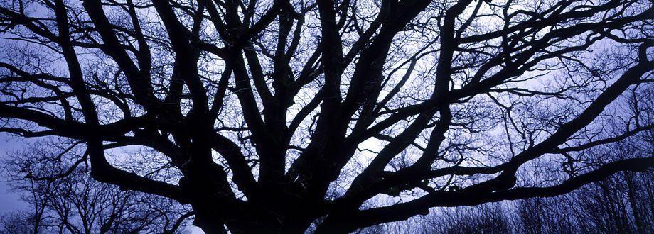 4_0_222_1french_tree_pan.jpg