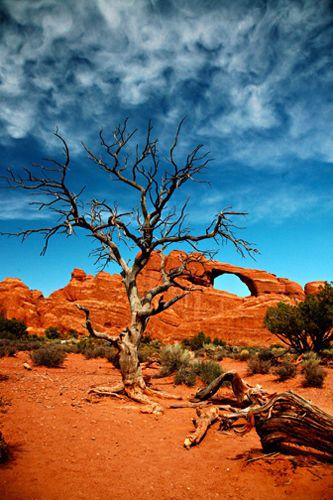 1a_gray_tree_moab.jpg