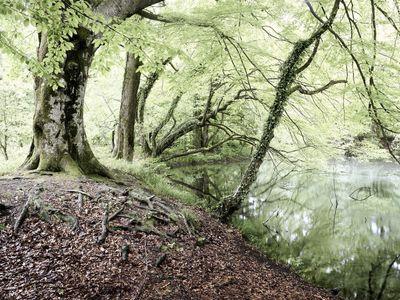 Forest, Plitvicka Jezera, Croatia.