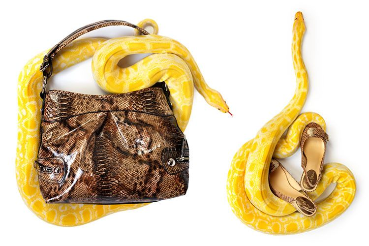 1snakes