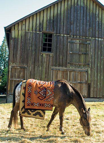 1HO_08_02a_Horse_254