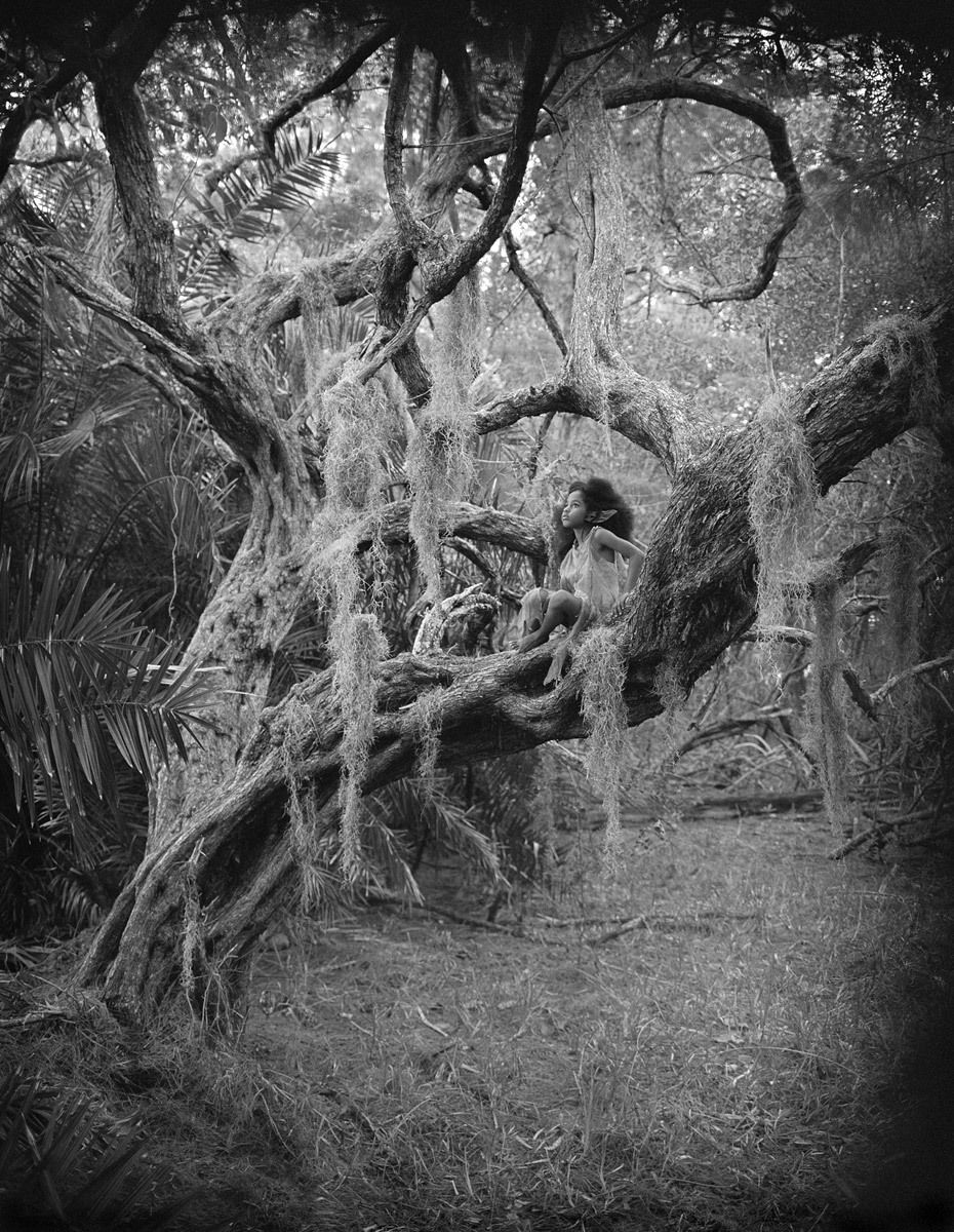 1r158__mossy_tree.jpg