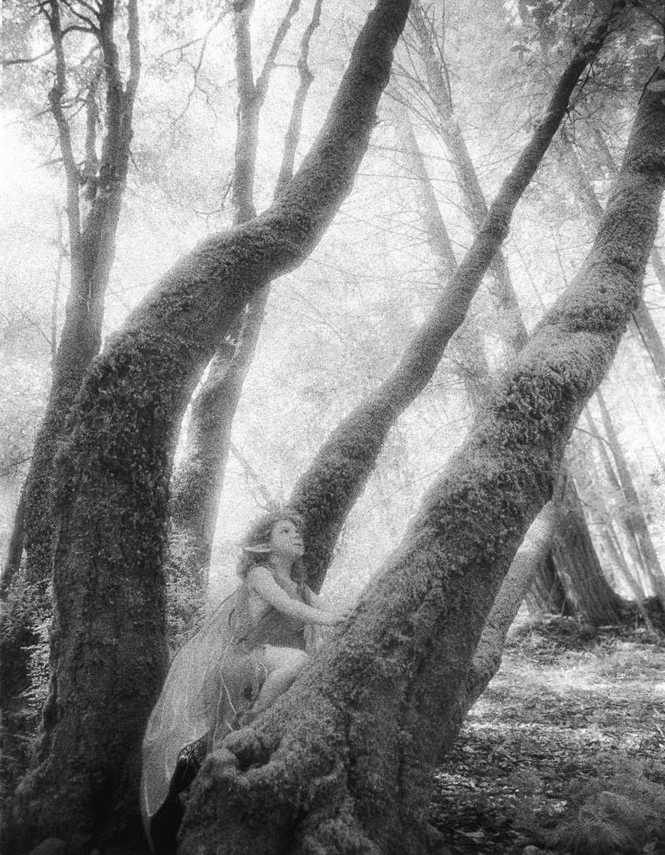 1r116_tall_tree.jpg