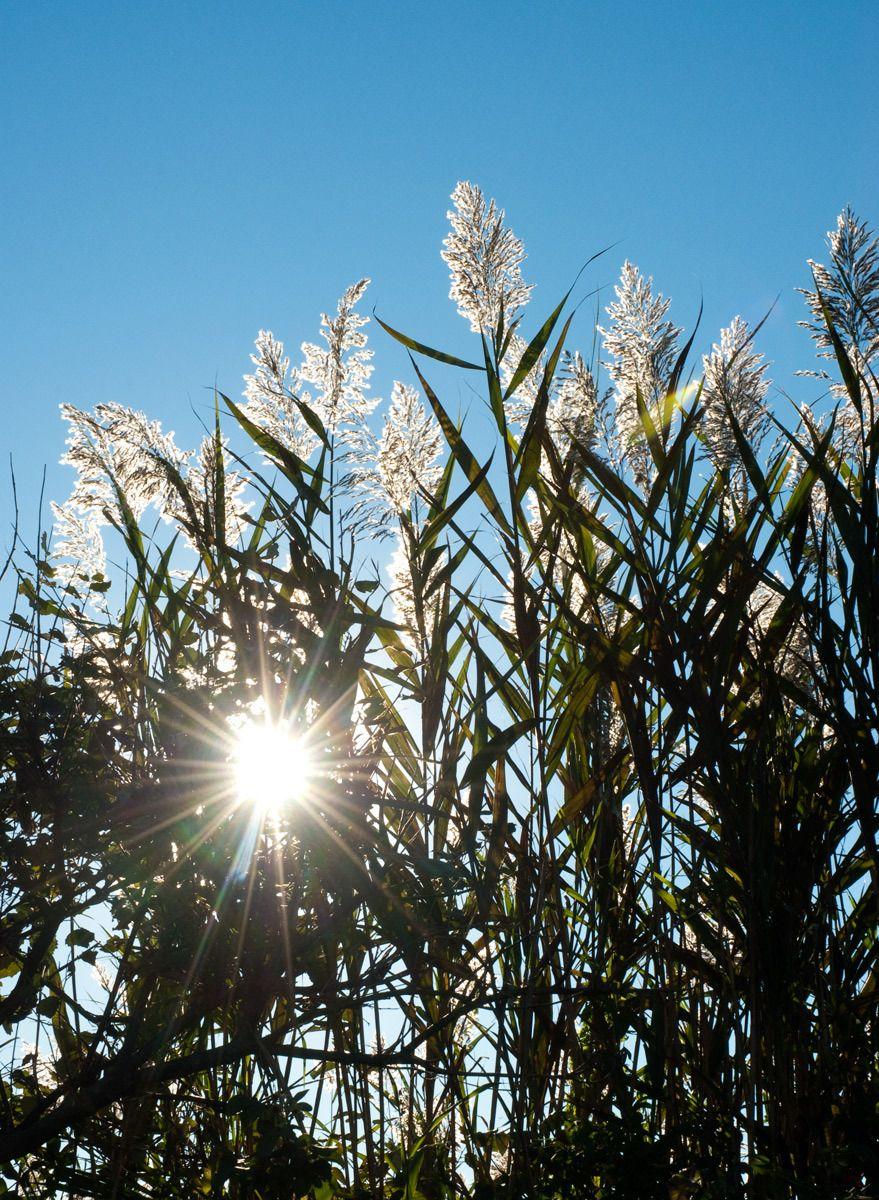 1grass_sun.jpg