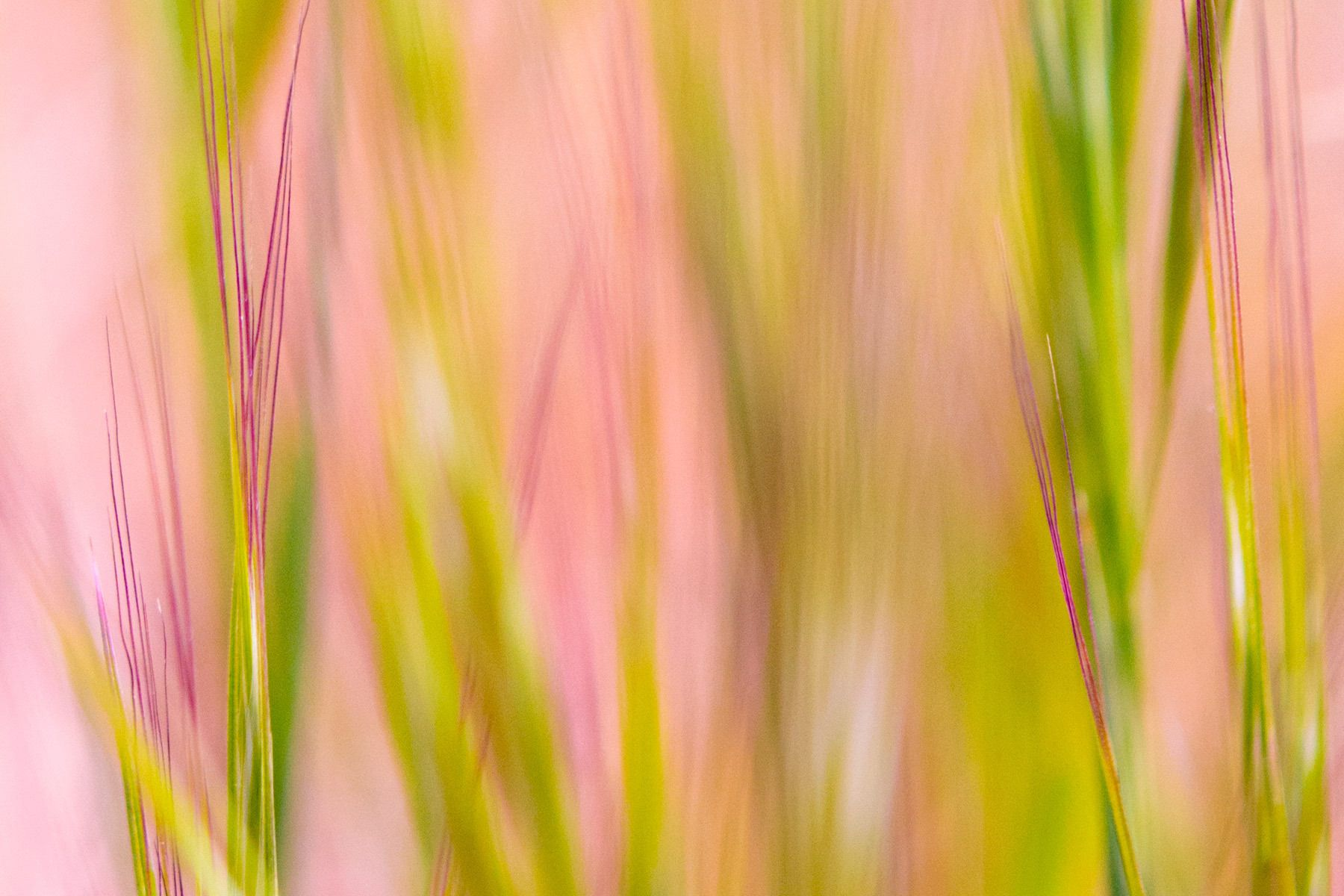 Abstract grass in pink and green