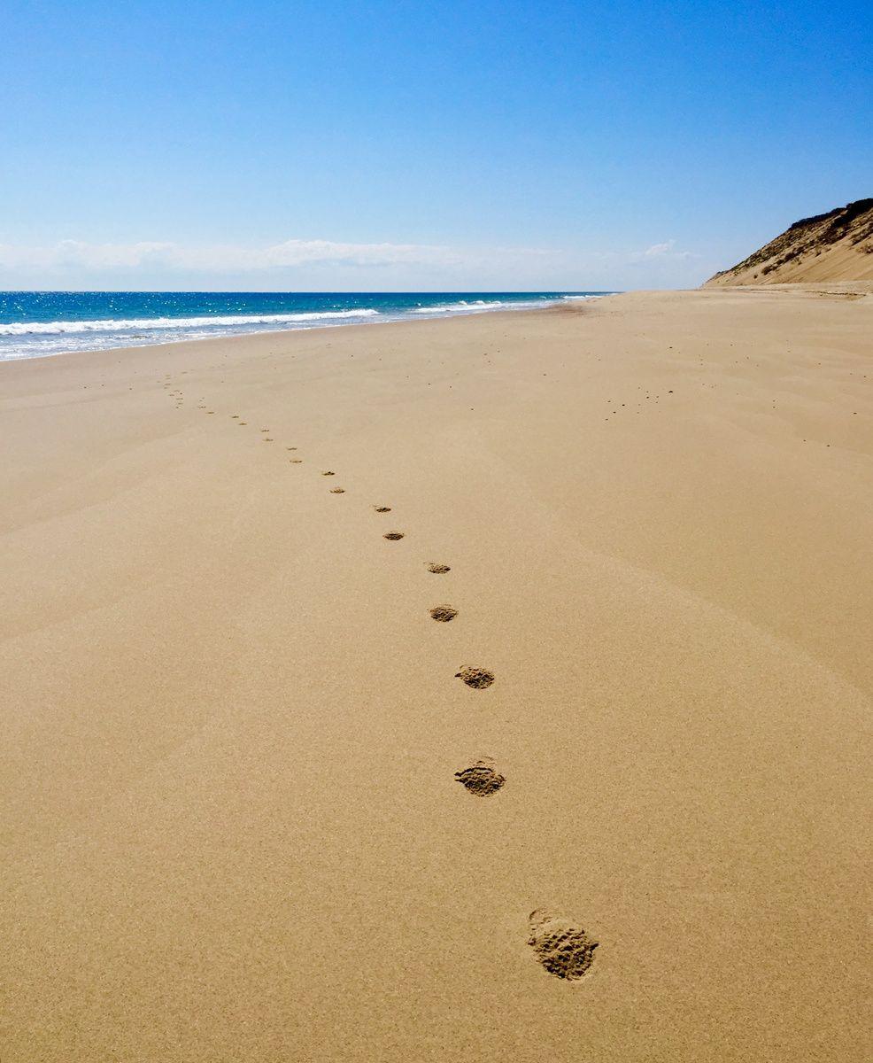 1footsteps2b.jpg