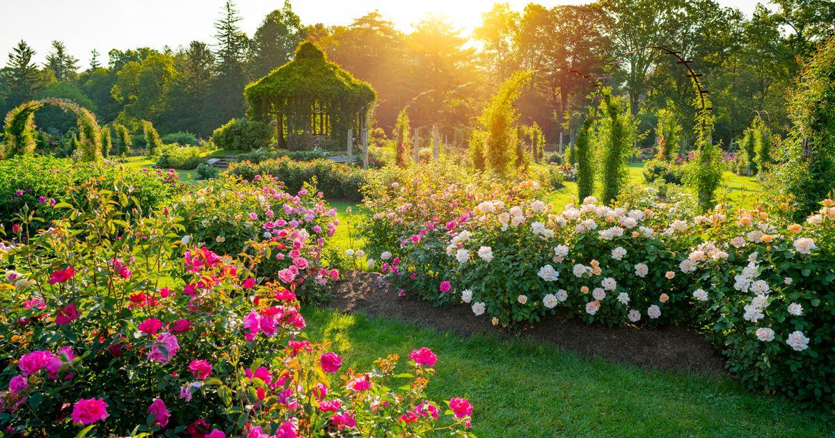 Rose_Garden_Flat_no_text.jpg