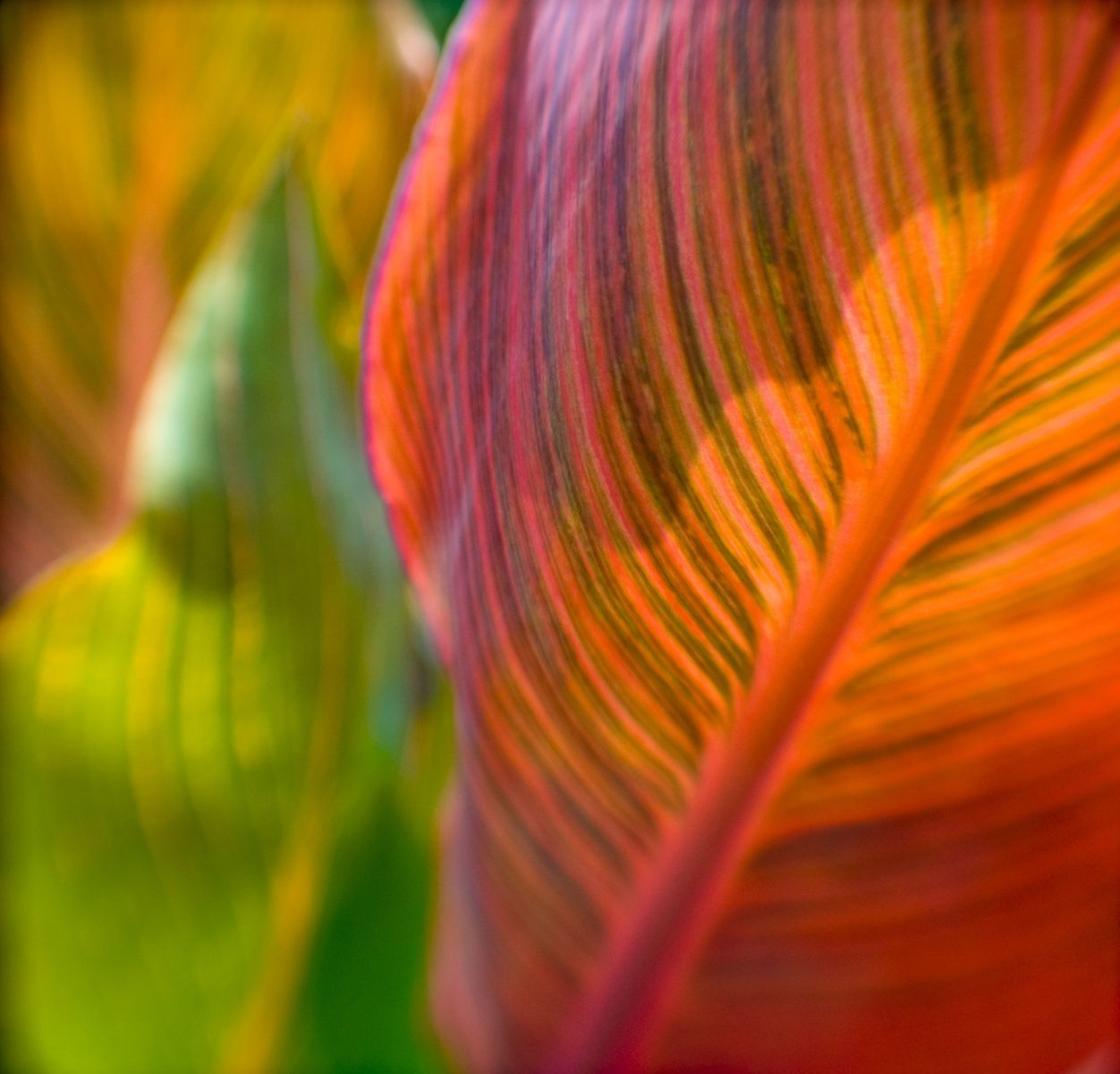 Tropical colorful leaves