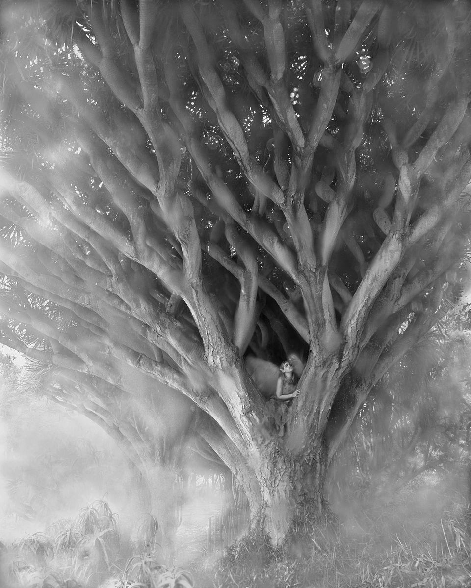 1r102_drago_tree.jpg