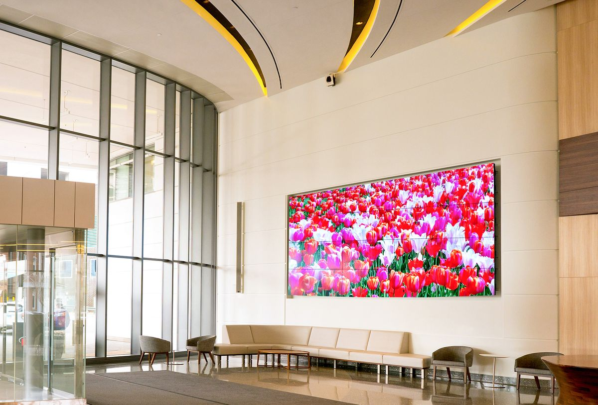 Tulip Field in Spring Video
