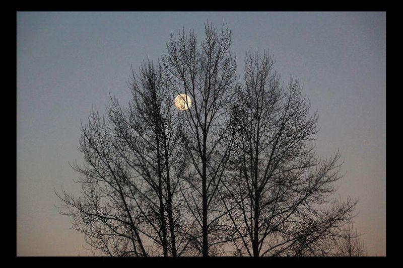 18_0_271_1moon___tree.jpg