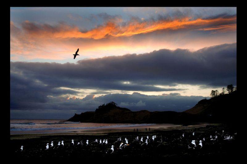 13_0_250_1ocean_seagulls_2.jpg