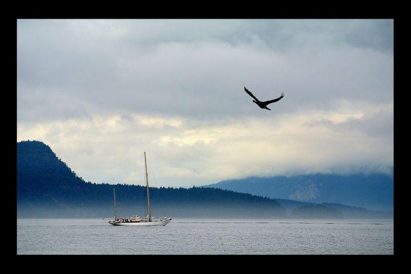 5_0_265_1boat___bird.jpg
