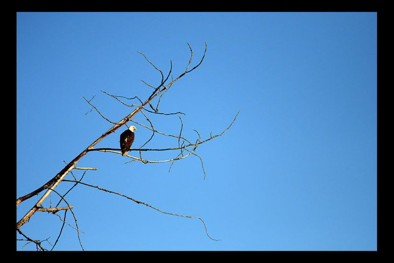 28_0_279_1ls_eagle.jpg