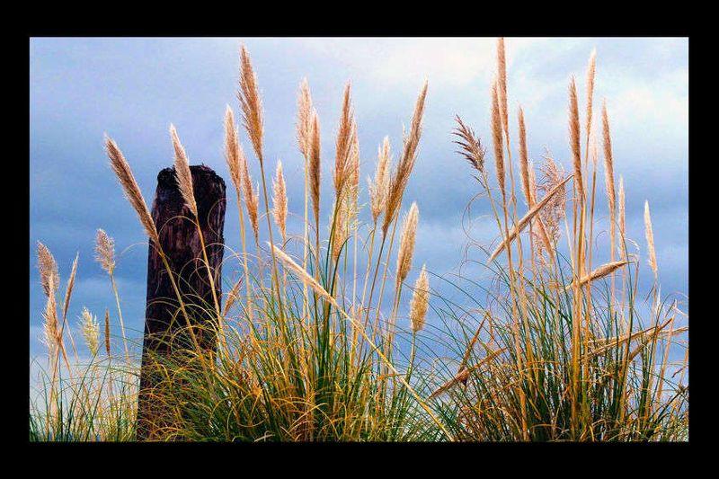 14_0_251_1orcas_grass.jpg