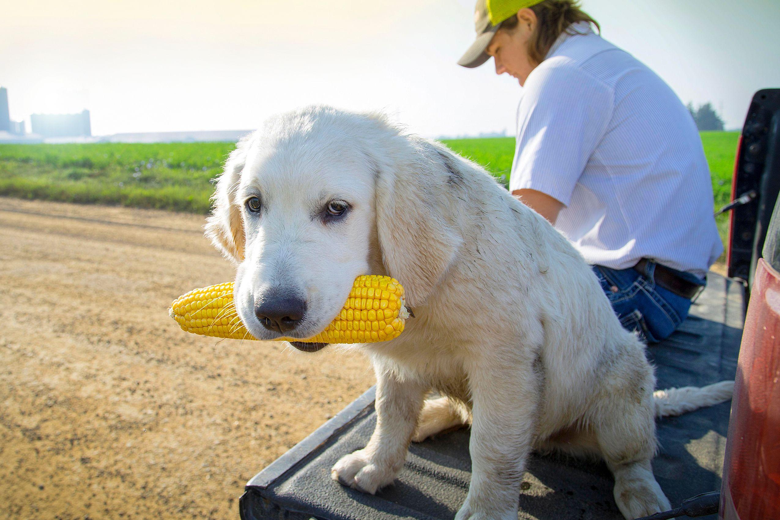 Dog&Corn_HARP9645_F.jpg
