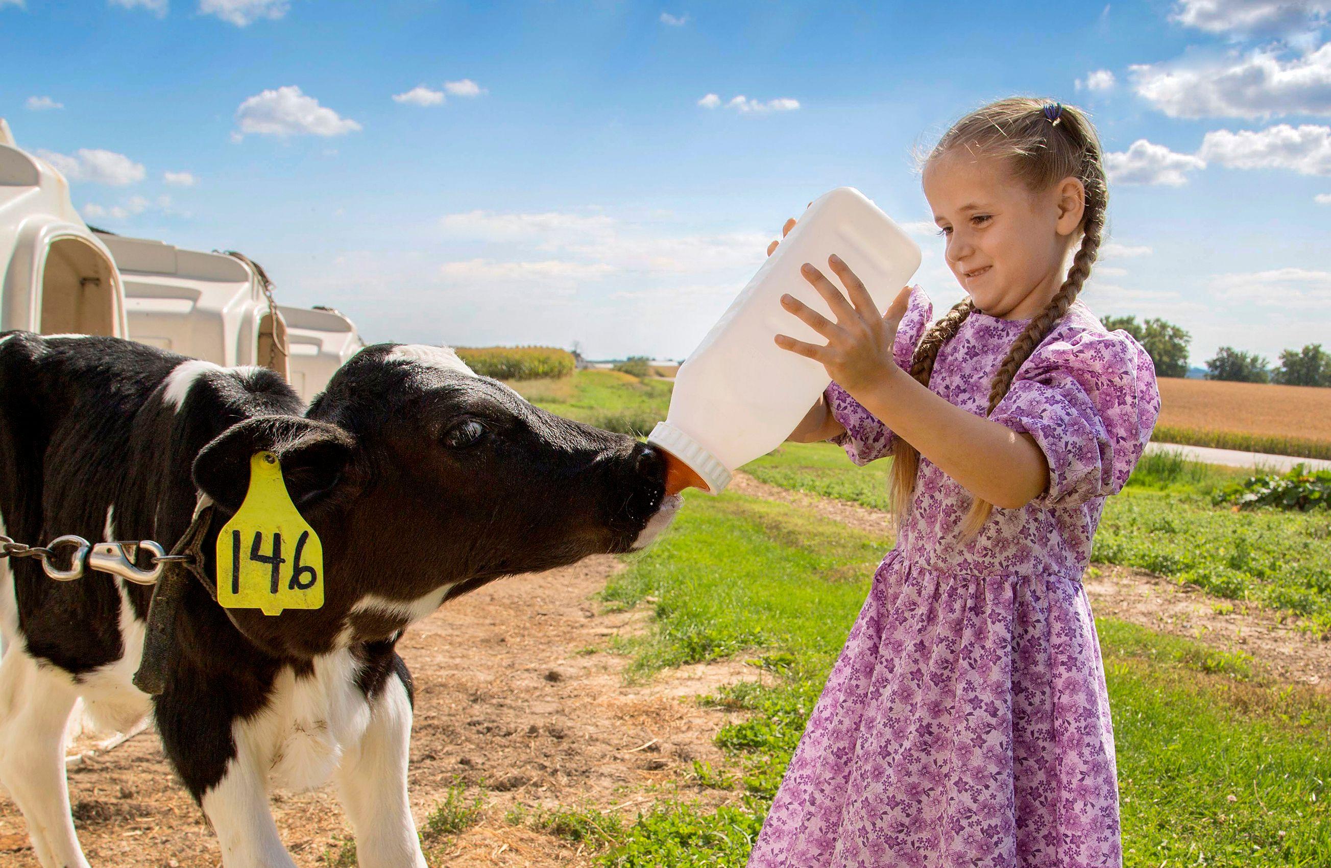 Girl_Feeding_Calf_HARP8366_F2.jpg