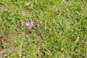 Ashley_Dan_Solitude_Resort_Solitude_Utah_Pinwheels_in_Grass_Decor.jpg