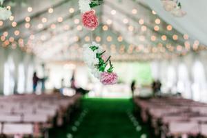 Katelyn_David_Oh_the_Carnations!.jpg