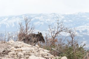 Ilana_Dave_Canyons_Resort_Park_City_Utah_Moose_Visitor_on_Slopes.jpg