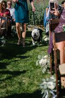 Tasha_Chip_Salt_Lake_City_Utah_Puppy_Ring_Bearer.jpg