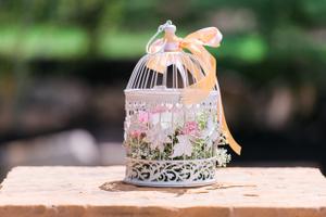 Katelyn_David_Birdcage_Baby_Breath_Pink_Carnations.jpg