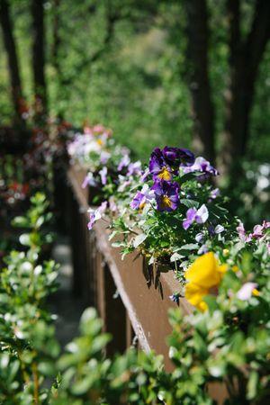 Claire_Scott_Millcreek_Inn_Salt_Lake_City_Utah_Flower_Detail_Bridge.jpg